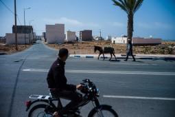Esel zuruck vom Feld am rand von Sidi Ifni