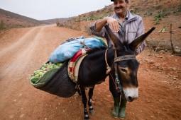 Mohamed fuhrt den Esel mit dem schweren Fracht zum Markt